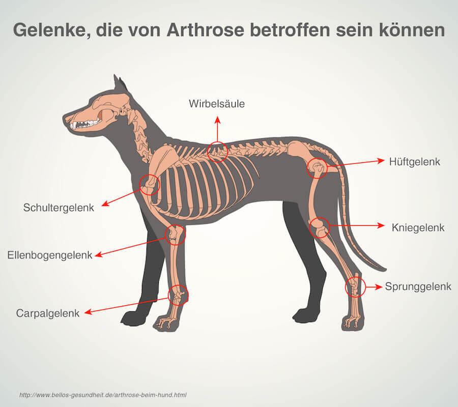 Spondylose bei Hunden