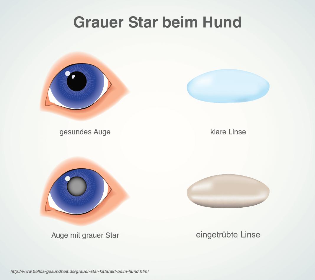 Grauer Star (Katarakt) beim Hund - Symptome & Behandlung