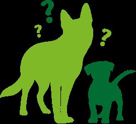Abszess Eitergeschwür Beim Hund Behandlung Ursachen