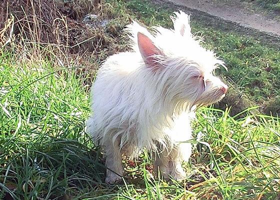 Hund im Gras ist Zecken ausgesetzt